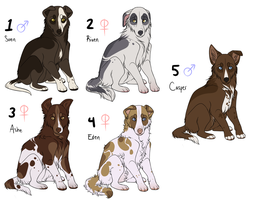 LO: The Lovely Litter by frappeholic