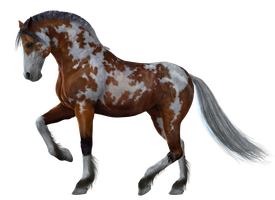 Horse 10 PNG by Variety-Stock
