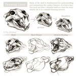 Tutorial: Drawing the head and face of a lion by oxpecker