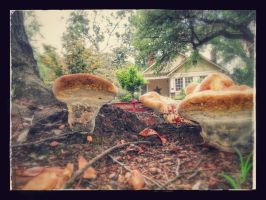 Mushrooms on the Walk by intouch