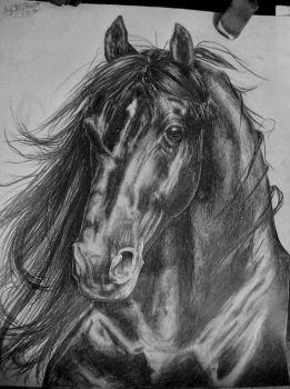 my best horse FINISHED by smerfette