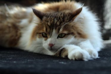 Findus resting by Sail0rSandy
