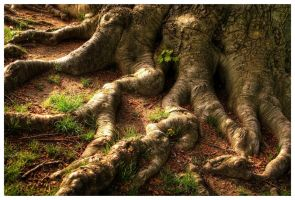 Old Roots by DennisChunga