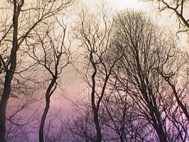 Trees Uninverted by ezo