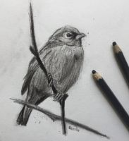 Charcoal Bird by VliegendeFiets