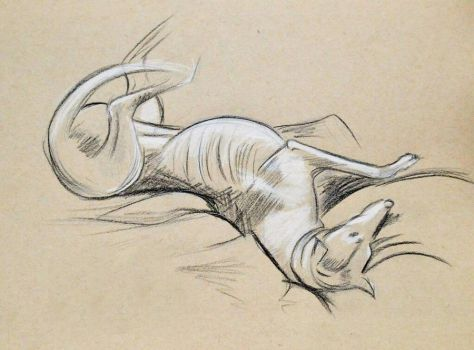 Greyhound On Tan Paper by TravelingArtist93