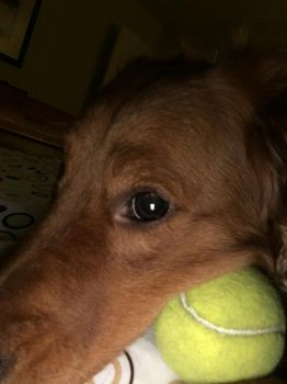 Tennis Ball in the Dark by No1much