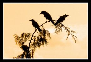 crows 2 by chinlop