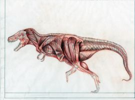T-rex musculature by FutureAesthetic