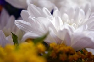 Natural background with white petals. by oanaunciuleanu