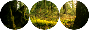 Forest Profile Deco (F2U) #2 by HelloStarseed