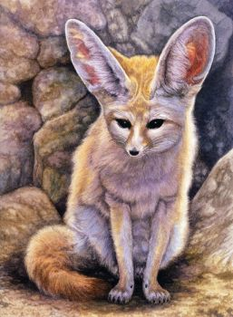 Fennec by WillemSvdMerwe