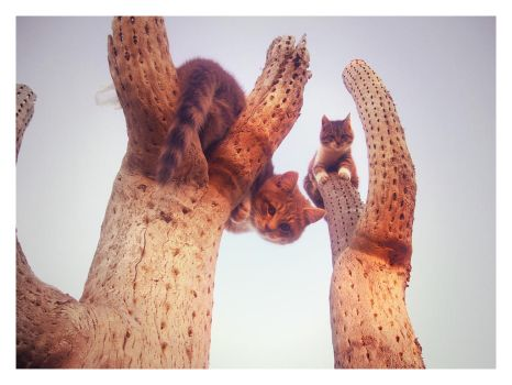 2 CATS 2 CACTUS by dnnlz