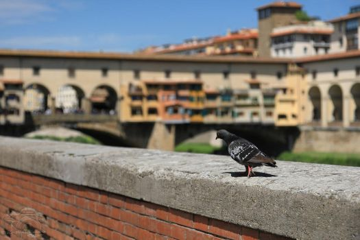 Florence in a Nutshell - Tourist at Ponte Vecchio by HoremWeb