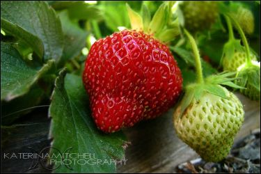 Strawberries by Katerina423