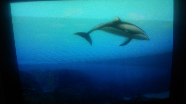 Dolphins by Horselover2471226