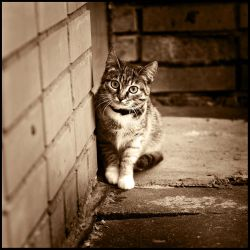 Where are you, friends? by tiefel