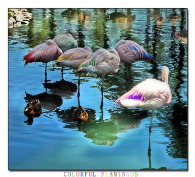 Colorful Flamingos by YOSHIMETAL