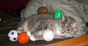 That cat has a lot of balls by Selaphi