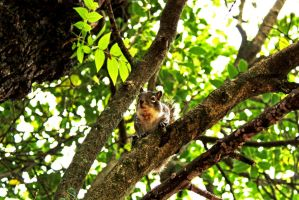 squirrel by luiss9