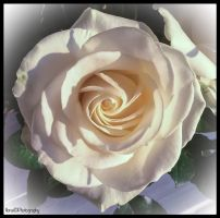 ONE OF THE BEAUTIFUL ROSES IN MY BOUQUET by IME54-ART