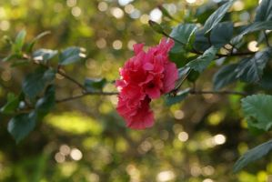 Pink Flower by DiFoGA