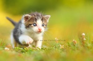cat puppy by Partridge-PetPics