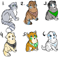 Adopts by PointAdoptsforyou