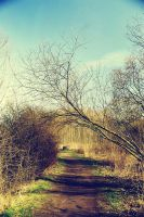 The winding road by woodfaery