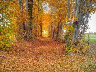 Autumnal Corridor: Red Path, Blue Thread by Foldo