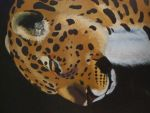 Close up of leopard painting on binder by Samijaye
