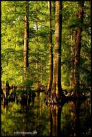Reelfoot Reflections by TRBPhotographyLLC