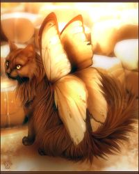 the Catterfly by evana