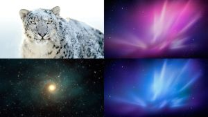 Snow Leopard Wallpaper Pack by akol12