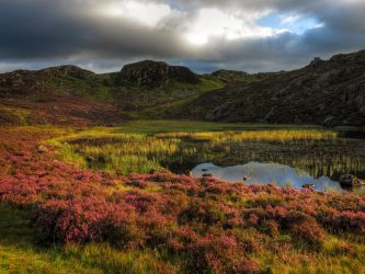 Summer Purples at Blackbeck by scotto