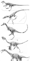 Archosaur Muscle Studies by Qilong