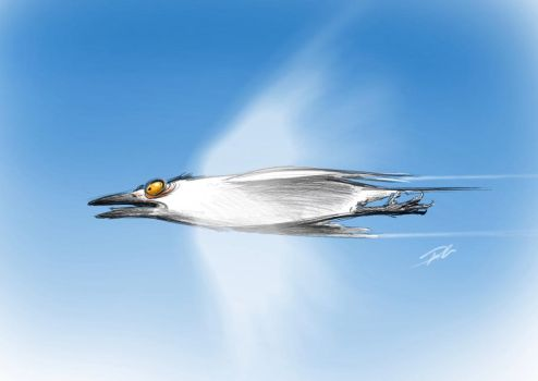 At the Speed of Sound by RobtheDoodler