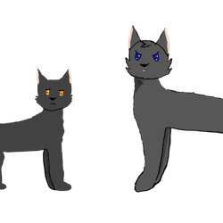 Breezepelt And Crowfeather  by ace-of-spades3220
