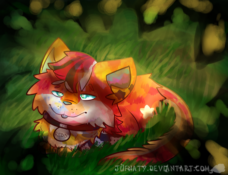 Hide'n Redd by Jufnaty