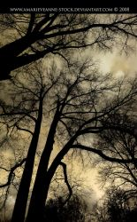 Brown trees by AmarieVeanne-Stock