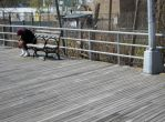Coney Island Benches 6 by icompton01