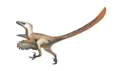 Velociraptor mongoliensis for Wikipedia by FredtheDinosaurman