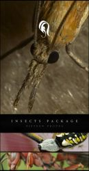 Package - Insect - 1 by resurgere