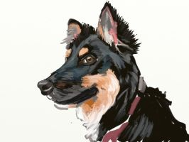 Kali the Border Collie by TheBigDaveC