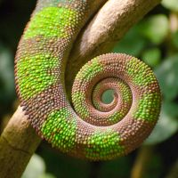 Chameleon Tail by roarbinson