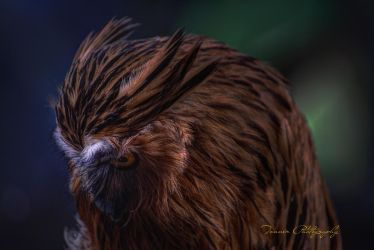 Owl by tonnerphotography