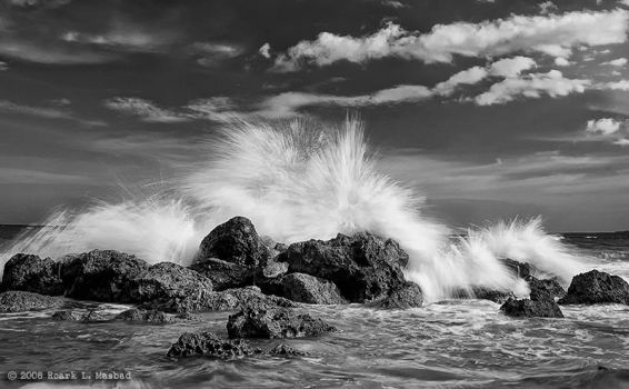 wild in mono by wookiegraphy