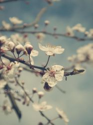 Spring Realm by SynfulEve