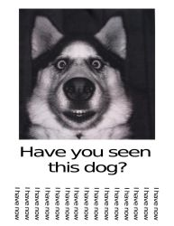 Have You Seen This Dog by DanelectroT