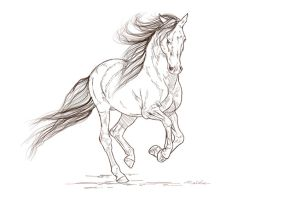 Free lineart - Andalusian by JulieBales